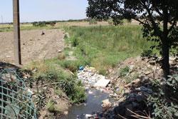 فاجعه سبزیهای آلوده در بیخگوش تهران